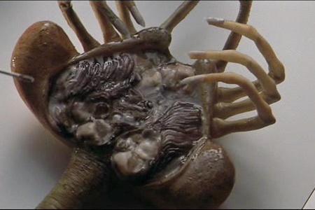 фильмы про паразитов в человеке