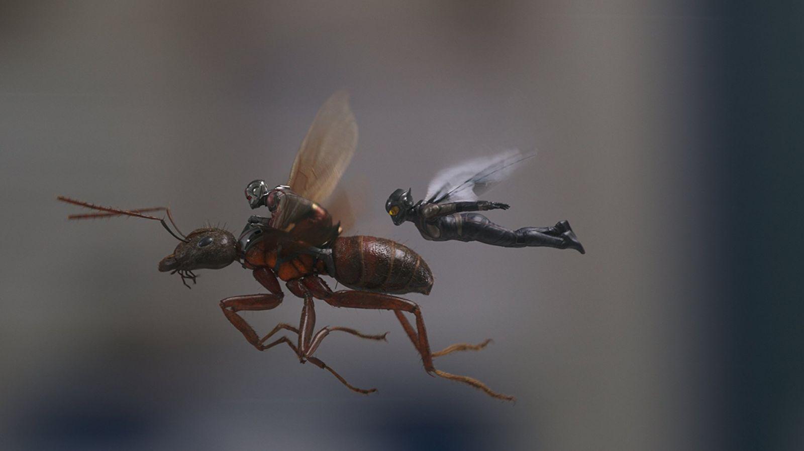 Кадр из фильма «Человек-муравей и Оса»