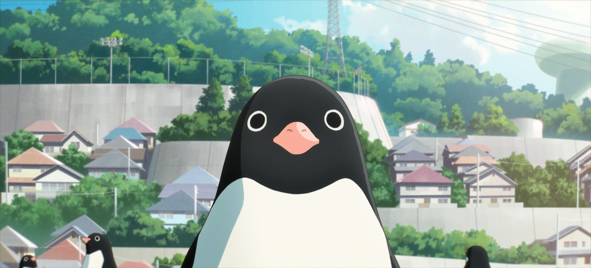"""Shot from the film """"The Secret Life of Penguins"""""""