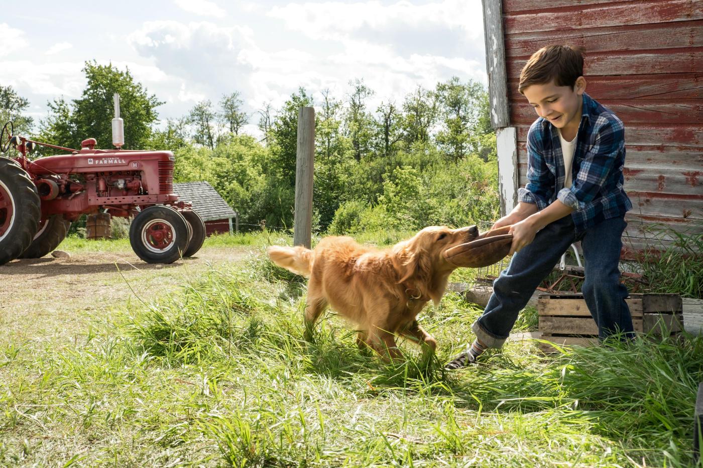 Картинки по запросу собачья жизнь фильм
