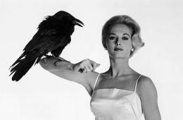 9 фильмов о смертельно опасных птицах
