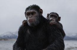 Искусство быть чужим. Что хорошего в том, что новый блокбастер «Планета обезьян: Война» предлагает болеть за обезьян и против людей (Борис Иванов, Film.ru)