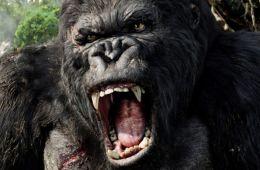 Убежище обезьяны