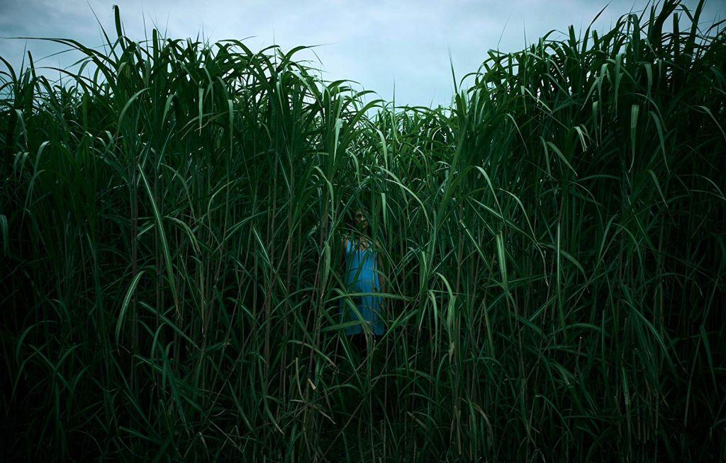 Вышел трейлер хоррора «В высокой траве» по новелле Стивена Кинга