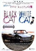 «Черные Кошки» — 2013