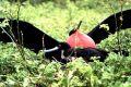 """Кадр 7 из 11 из фильма """"Галапагосы 3D"""" /Galapagos 3D/ (1999)"""