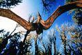 """Кадр 1 из 8 из фильма """"Т-Рекс. Исчезновение динозавров 3D"""" /T-Rex: Back to the Cretaceous/ (1998)"""