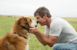 Do you know movies about dogs?