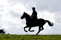 Боевой конь. Репортаж со съемочной площадки фильма «Боевой конь» (Иан Фрир, Empire)