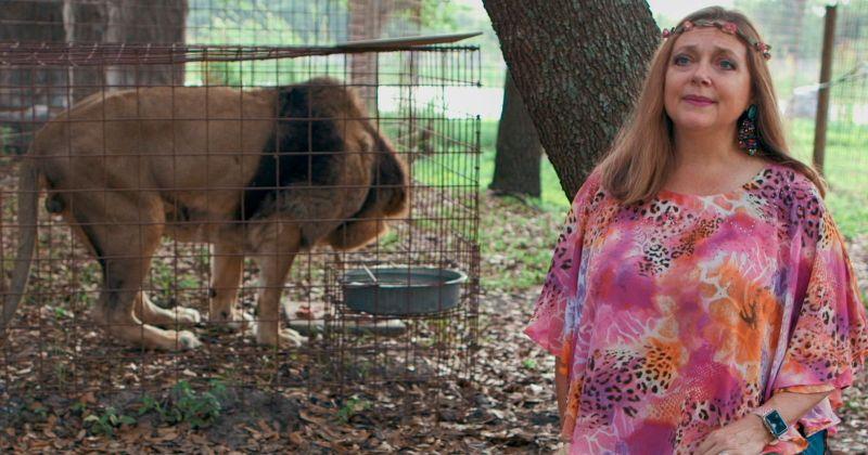 Кэрол Баскин из «Короля тигров» может получить собственное шоу